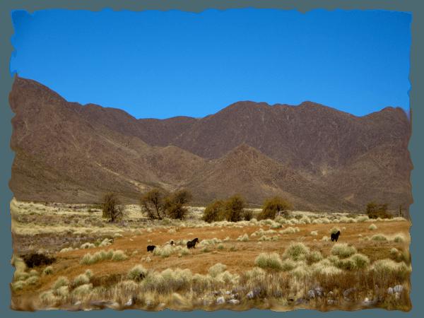 Gefühlschaos vor der Reise: Pferde in der Natur