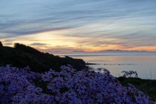 Sonnenuntergang in Wellington beim Abendessen