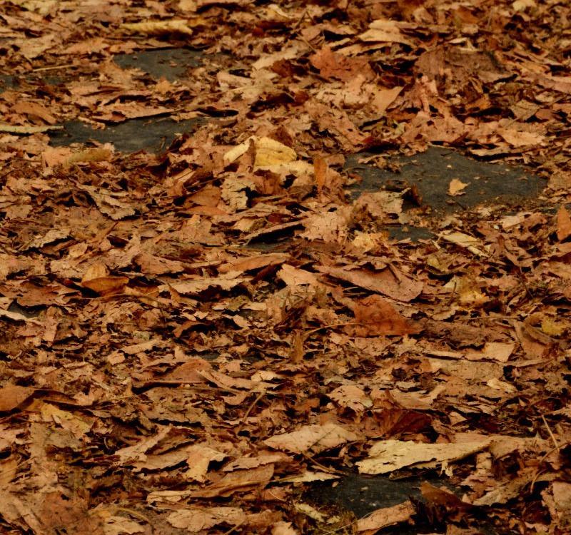 Gelbe Blätter liegen auf dem Boden
