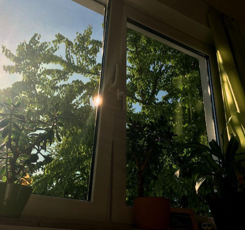 """Der Blick aus dem Fenster """"zu Hause"""""""