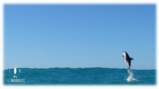 Ein Delfin springt aus dem Wasser