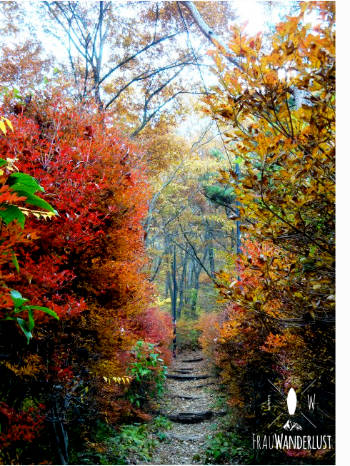 Bunte Blätter im Wald