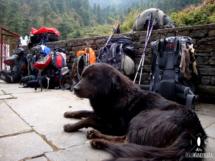 Der Hund bewacht unsere Rucksäcke