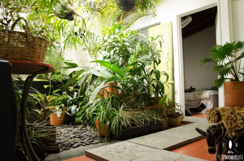 Medellín: Saman Hostel 1