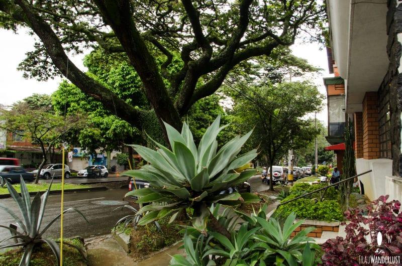 Medellin: Laureles