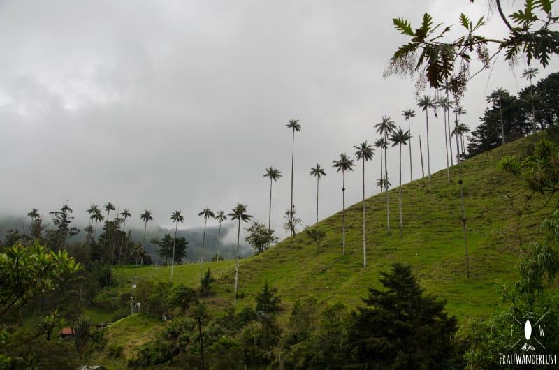 Salento; im Valle de Cocora
