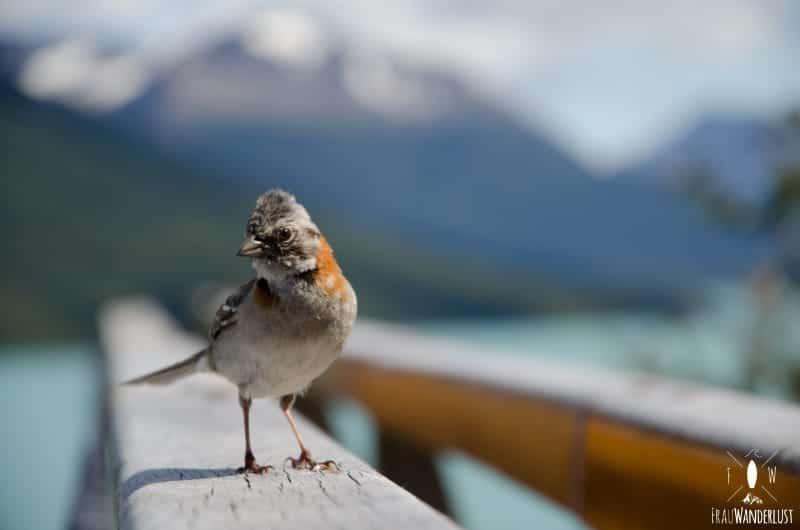 Patagonien auf eigene Faust: tolle Fauna