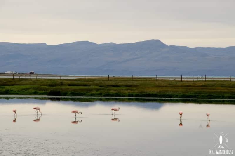 Patagonien auf eigene Faust: Flamingos