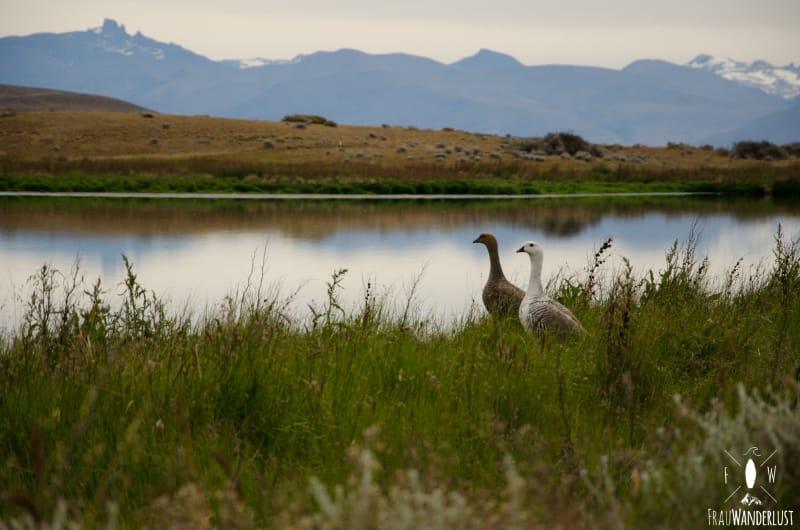 Patagonien auf eigene Faust: Die Lagune