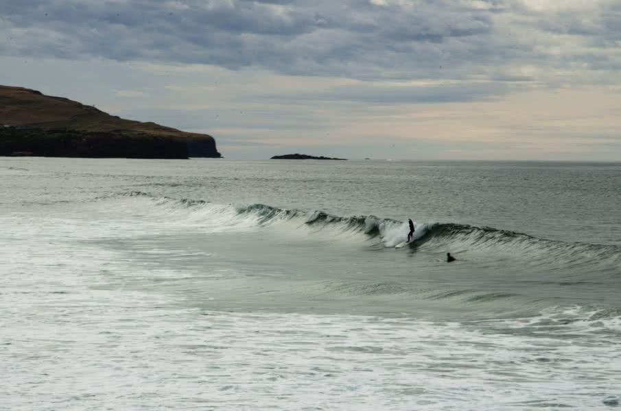 Surfen in Neuseeland: Dunedin