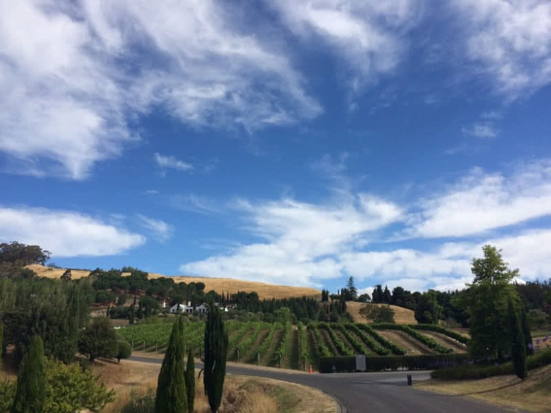 Work and Travel in Neuseeland: Blick über ein Weingut