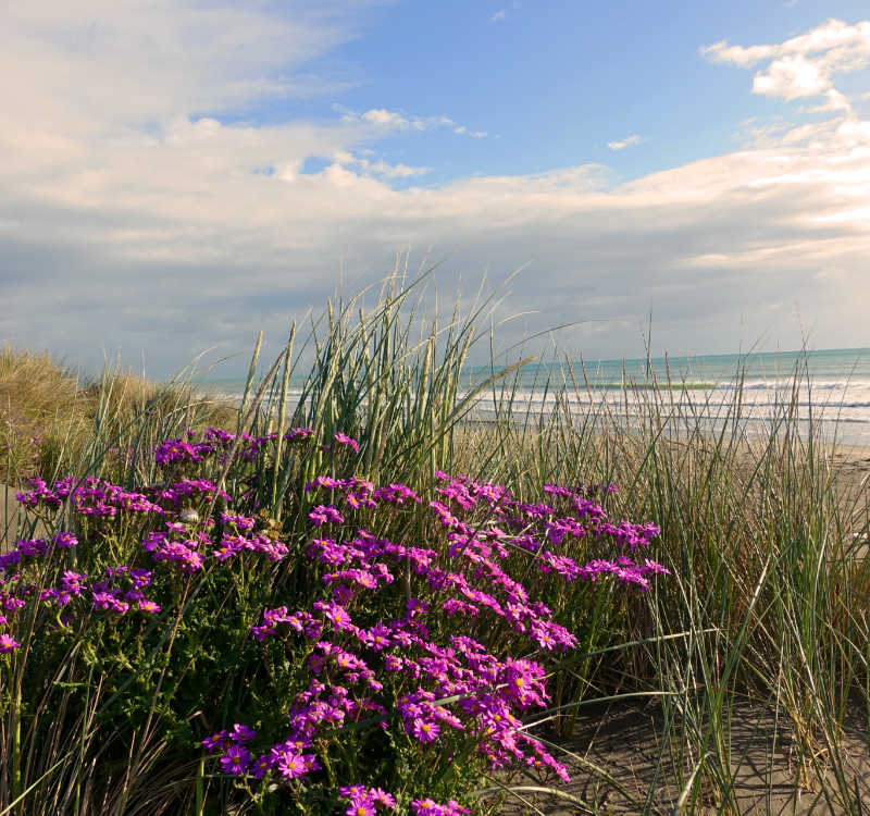 Auszeit nehmen: Blick auf den Strand mit Blumen